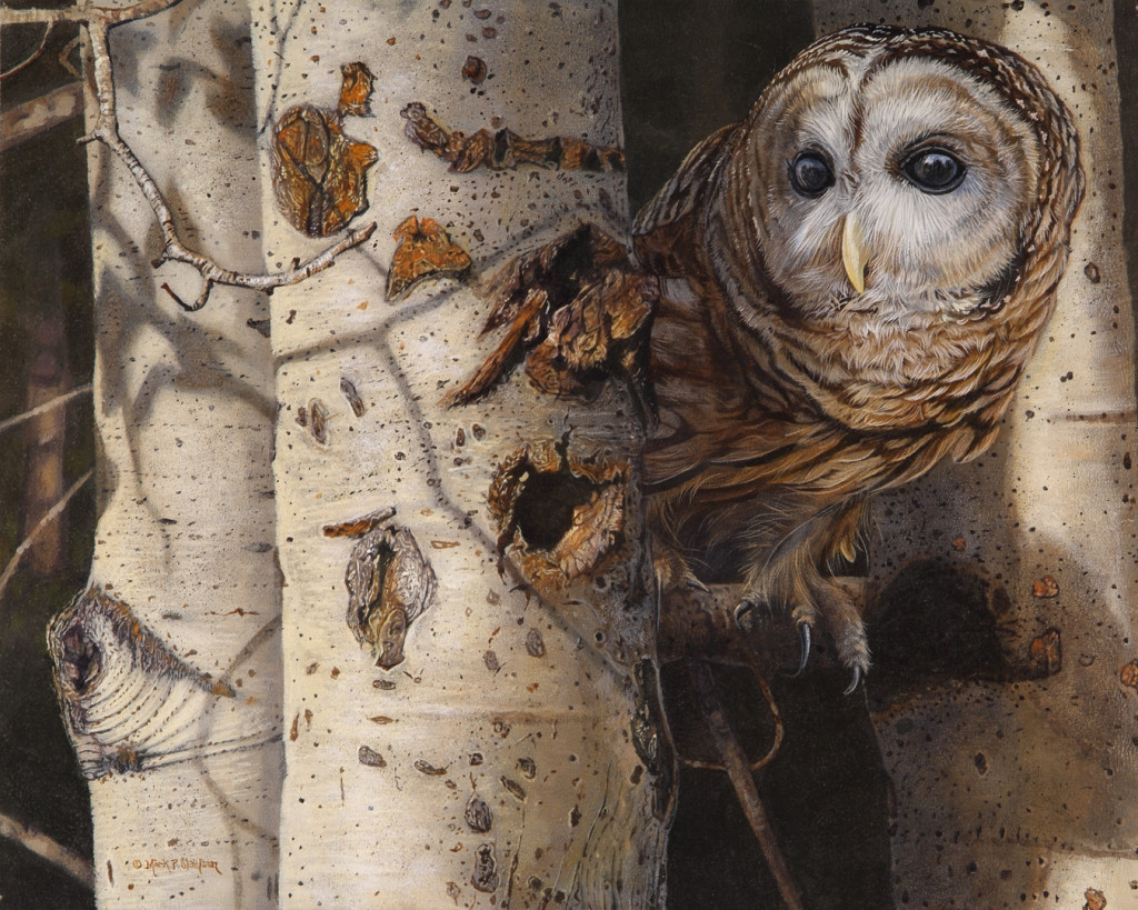 Mark Slawson Barred Owl