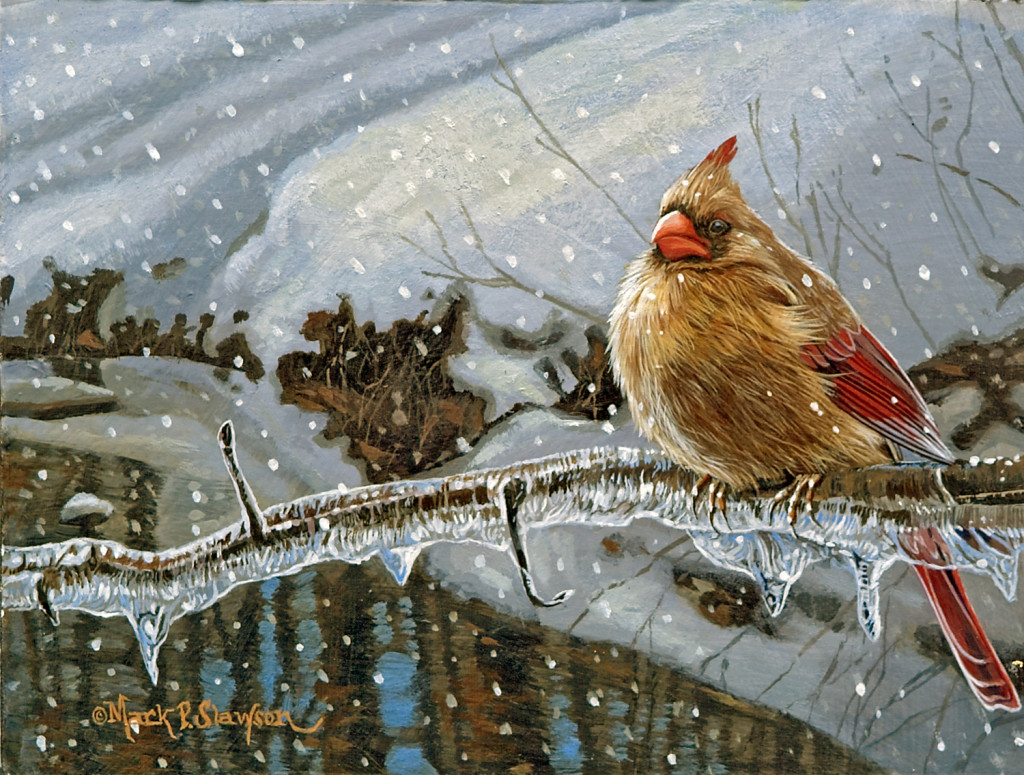 Mark Slawson Female Cardinal in Snow