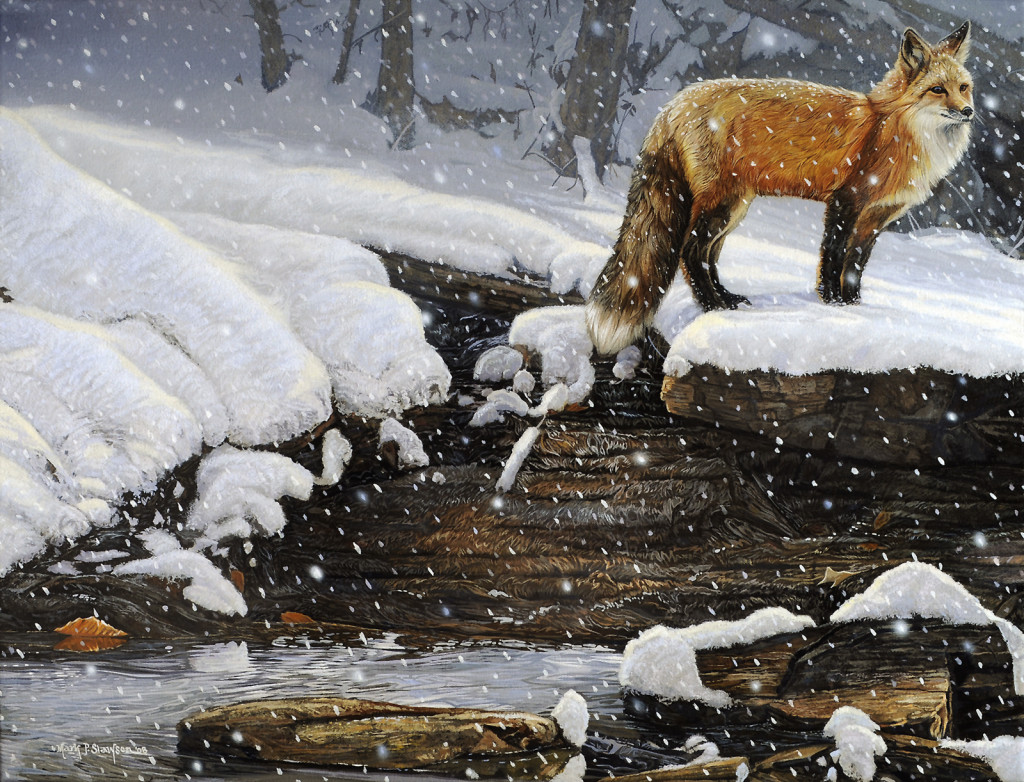 Mark Slawson Red Fox in the Snow