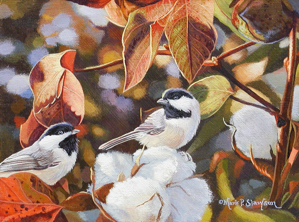 Chickadee Cotton