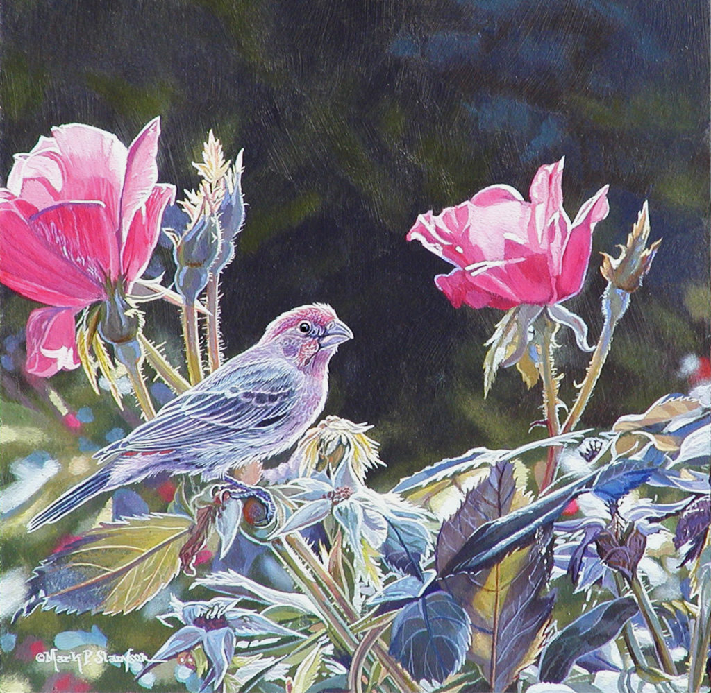 House Finch Roses