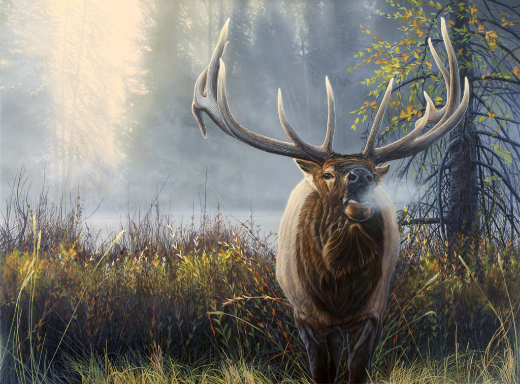 Mark Slawson » North American Big Game